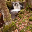 Stock Photo: Autumn in Padley Gorge in Peak District