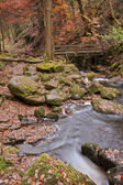 Herfst in padley kloof peak district — Stockfoto