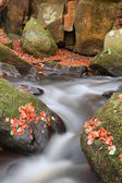 Blurred water detail with rocks nad Autumn leaves in Padley Gorg — Stock Photo