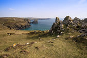 Kynance Cove cliffs looking across bay — Stock Photo