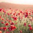 Stunning poppy field landscape under Summer sunset sky with cros — Stock Photo #27779665