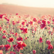 Stock Photo: Stunning poppy field landscape under Summer sunset sky with cros