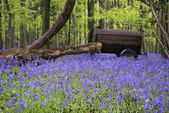 Old farm machinery in vibrant bluebell Spring forest landscape — Stock Photo