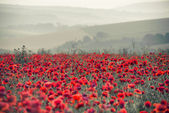 Poppy field landscape in Summer countryside sunrise with differe — Foto Stock