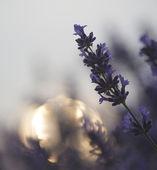 Belle focus différentiel technique givingshallow profondeur de fi — Photo