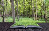 Creative concept pages of book Vibrant lush green Spring forest — Stock Photo