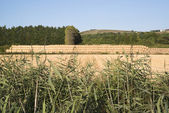 Countryside landscape of field of hay bales viewed through wild — Stock Photo