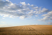 Countryside landscape of freshly harvested field on Summer day — Stock Photo