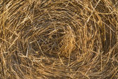 Image of round hay bales for use as background — Stock Photo