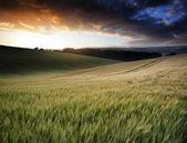 Imagen de paisaje de verano de trigal al atardecer con hermosa l — Foto de Stock