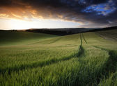 Summer landscape image of wheat field at sunset with beautiful l — Stock Photo