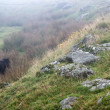 Landscape over Dartmoor National Park in Autumn with rocks and f — Stock Photo