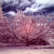 Stock Photo: Stunning false color infrared forest landscape image