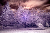 Stunning false color infrared forest landscape image — Stock Photo