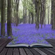 Creative concept pages of book Vibrant bluebell carpet Spring fo — Stock Photo