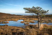 Blue sky over Autumn heath landscape — Stock Photo