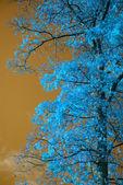 Deslumbrante paisagem de árvores e céu incomum de falsa cor — Fotografia Stock