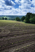Landscape image of agricultural farm with new planted crops in S — Stock Photo