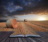 Beautiful golden hour hay bales sunset landscape Creative concep — 图库照片