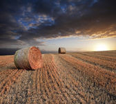 Beautiful golden hour hay bales sunset landscape — Stok fotoğraf