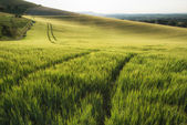 Beautiful landscape wheat field in bright Summer sunlight evenin — Stock Photo