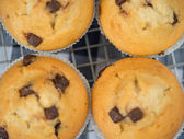 Home made tasty chocolate chip muffins on cooling rack — Stock Photo