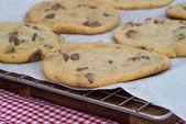 Beautiful fresh hand made chocolate chip cookies — Stock Photo