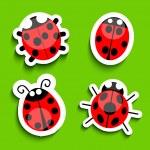 Ladybug — Stock Vector #24576411