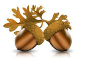 Acorns with leaves — Stock Vector