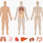 Human anatomy of man background — Stock Vector #40161313