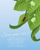 Joaninha na folha verde — Vetorial Stock
