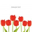 Red tulip spring card — Stock Vector #5650055