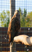 Eagle sits on wooden log — 图库照片