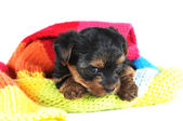 Very cute puppy in colorful skarf — Stock Photo