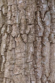 Wooden rind texture — Stock Photo