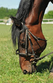 Horse eats grass — Stock Photo