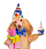 Birthday dog with balloons and a cupcake. — Stock Photo