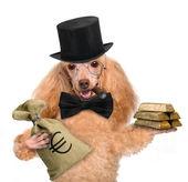 Money dog holding. — Stock Photo