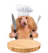 Cocinero de perro — Foto de Stock