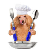 Hond chef-kok — Stockfoto