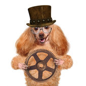 Dog in a vintage hat on a white background. — Stockfoto
