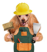 Dog handyman — Stock Photo