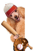 Baseball dog with a baseball — Stock Photo