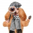 Dog with magnifying glass and searching — Stock Photo #41519985
