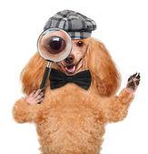 Hond met Vergrootglas en zoeken — Stockfoto