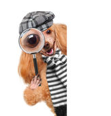 Dog with magnifying glass and searching — Stock Photo