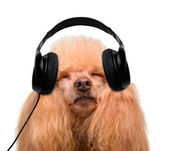 Dog in headphones listening to music — Stock Photo