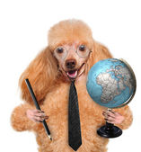 Dog with globe — Stock Photo