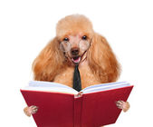 Dog reading a book — Stock Photo