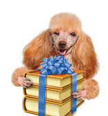 Dog with books as a gift — Stock Photo